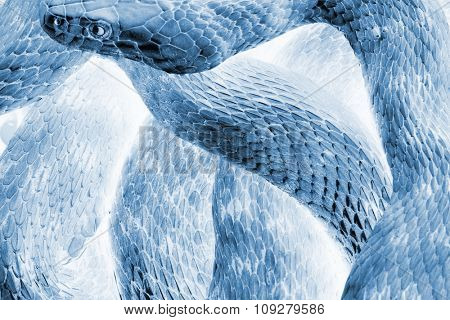 Abstract  blue Snake