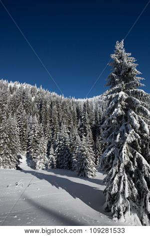 Snow covered trees and blue sky in winter. Vertical photo in ski resort