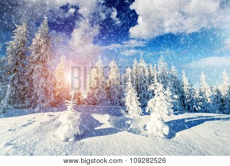 Majestic landscape glowing by sunlight in the morning. Picturesque wintry scene. Location Carpathian national park, Ukraine, Europe. Ski resort. Beauty world. Instagram toning effect. Happy New Year!