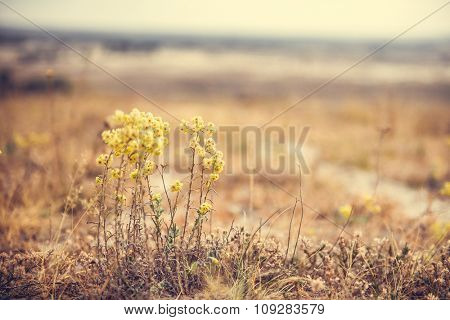autumn wild flowers on blurred background of a field on sunset