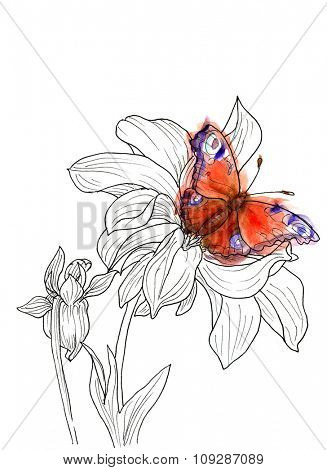 Line ink drawing of dahlia flower with butterfly. Black contour on white background with watercolor splash