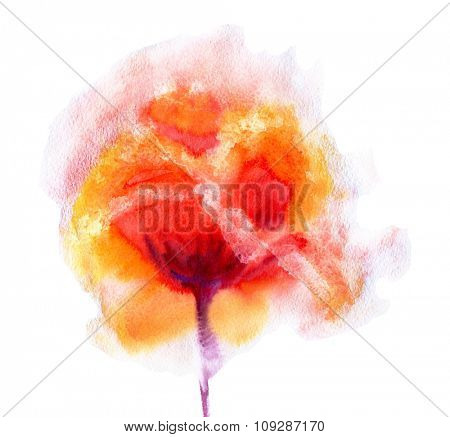 Hand Painted Watercolor Flower Poppy. Wet painting illustration