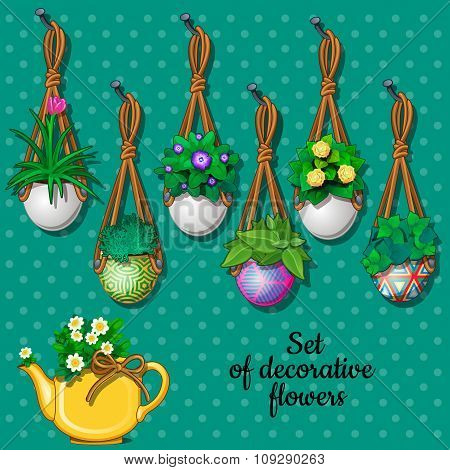 Set of flowers in hanging pots and kettle, 7 different elements
