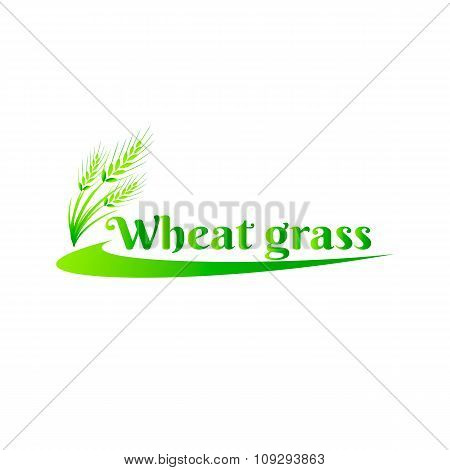 Wheatgrass green juice. Logo, banner, frame for business, the store site for clean super food or pal