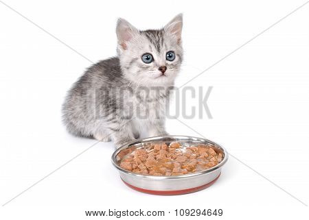 Kitten near a bowl with food on white background