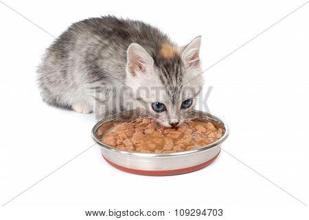 Gray kitten eats from a bowl