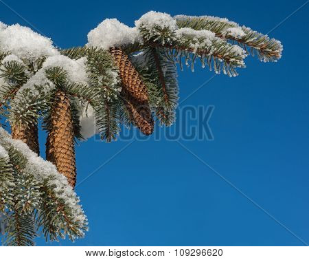 Snow Covered Branch And Many Blue Sky