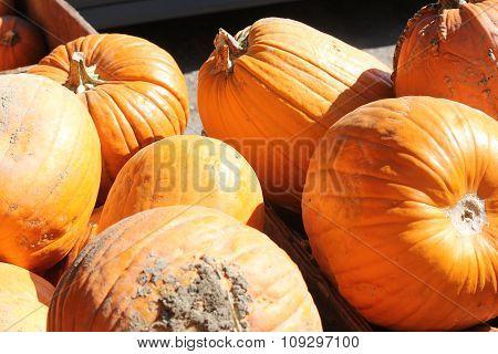 Pumpkins in a pile