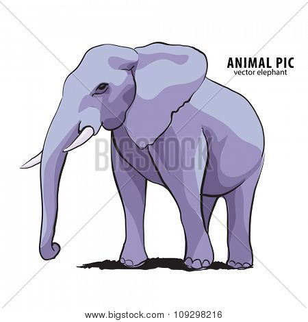 Illustration of elephant on white