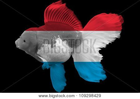 Flag of Luxembourg on goldfish