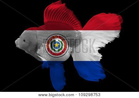Flag of Paraguay on goldfish