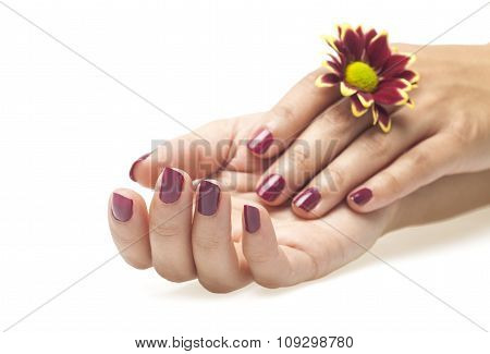Female hands and flower on white background