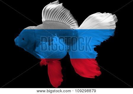 Flag of Russia on goldfish