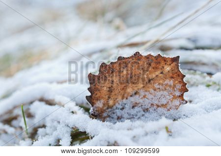 Frosty autumn leaf