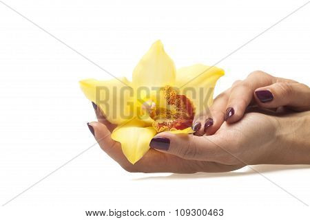 Female hands and yellow orchid on white background
