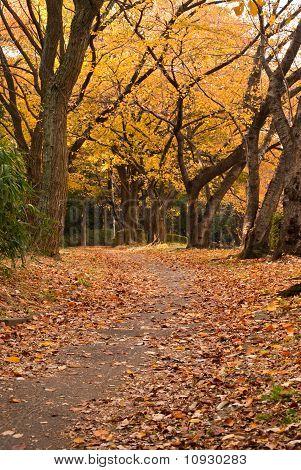 An Autumnal Park Scene