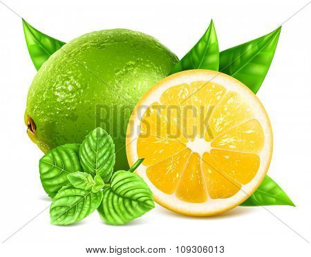 Fresh lime, lemon and mint. Vector illustration
