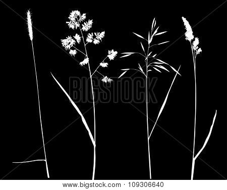 illustration with plant silhouettes isolated on black background