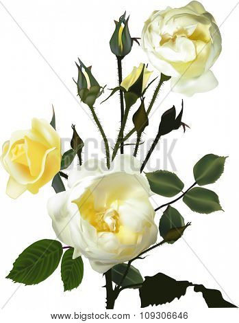 illustration with yellow roses isolated on white background