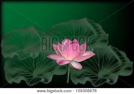 illustration with lotus flower on dark background