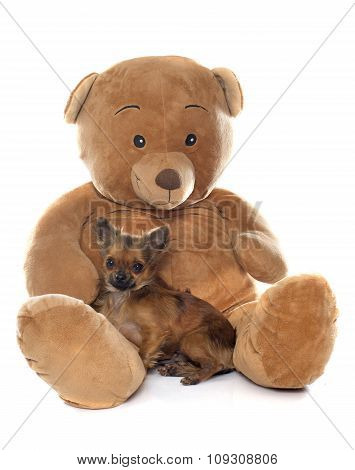 Puppy Chihuahua And Teddy Bear