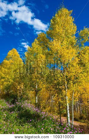 Fall Colors And Purple Wild Flowers Near Pandora Lane Telluride Colorado