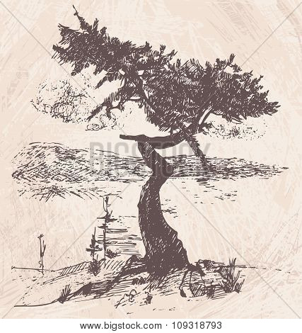 Hand Drawn Tree Larch. Vector Illustration