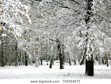 Snow In The Autumn Park