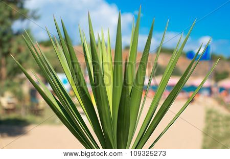 Close-up View Of Palm Leaves On The Beach.