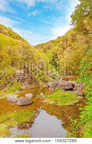 Tropical Natural Landscape