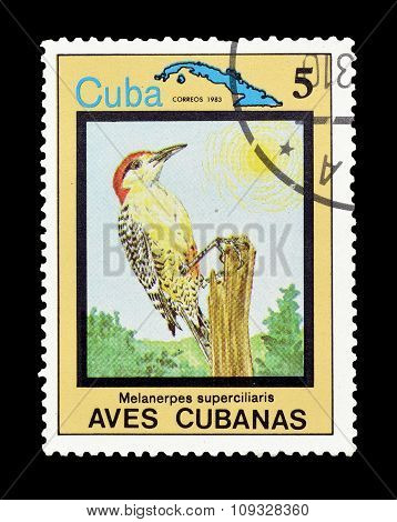 Cuba 1983 The West Indian woodpecker