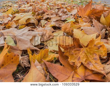 Leaves In The Ground