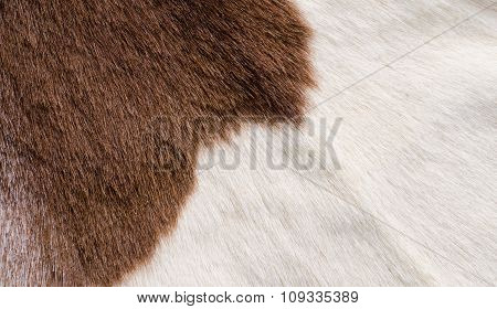 brown and white fur texure