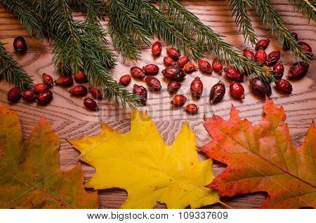 Wooden background with spruce needles, rose hips and colorful leaves. On a wooden table, Autumn back