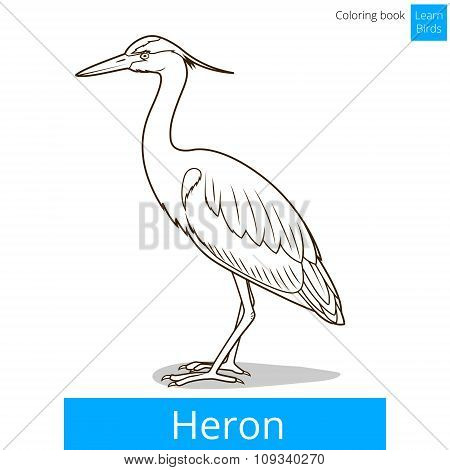 Heron learn birds coloring book vector