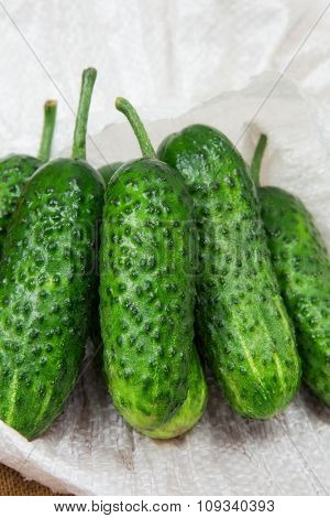 beautiful green cucumbers. natural background