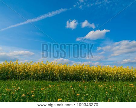 Summer meadow and rapeseed field with blue sky