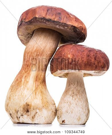 Porcini mushrooms. File contains clipping paths.
