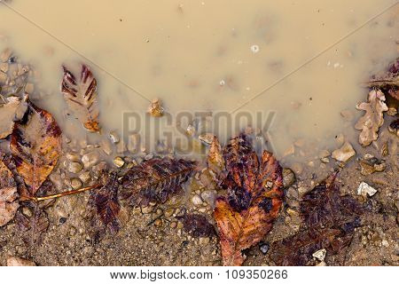 Brown Orange Autumn Leaves In Rain Puddle Fall Background