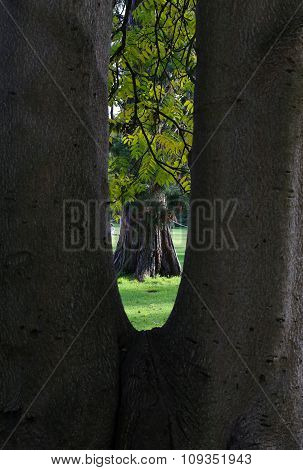 Scene Of An Autumn Tree Framed Through A V-shaped Tree