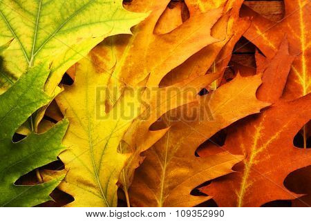 Colourful and bright fallen autumn leaves background, close up