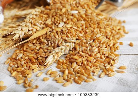 Fresh wheat grains on napkin, closeup