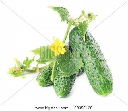 Fresh cucumbers with leafs isolated on white background