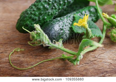 Cucumbers with leafs on wooden background, close up
