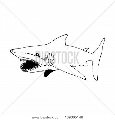 sketch hand draw a shark in the style