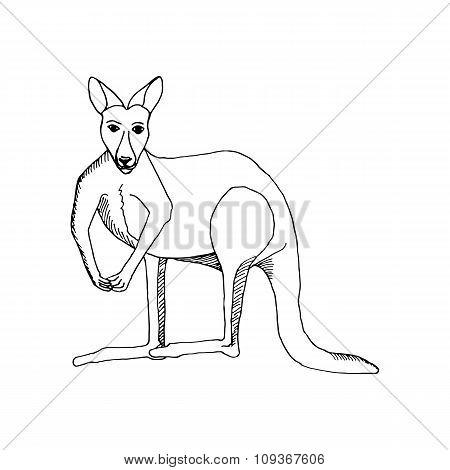 hand draw a kangaroo-style sketch