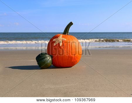Coastal Pumpkin
