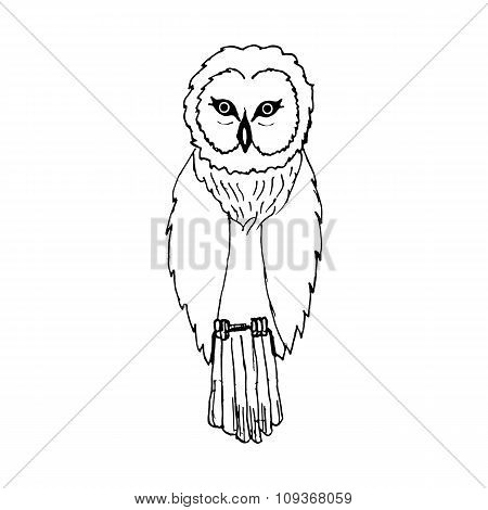 hand draw a sketch in the style of an owl