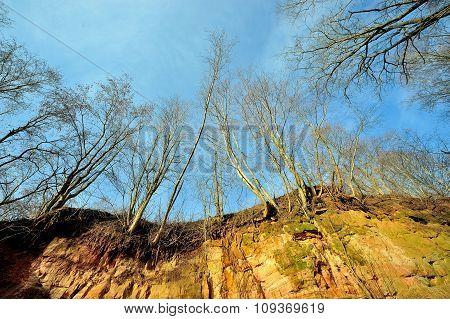 Naked Tree On A Blue Sky Background. Early Springtime