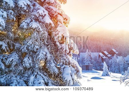 Winter in the mountains, beautiful landscape, big coniferous tree covered with snow, mountainous village, luxury wintertime resort, Alps, Europe